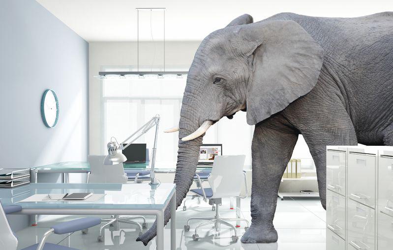 Keep the Faith-Ignore the Elephant!