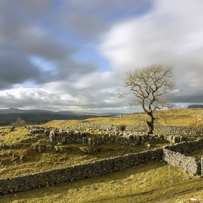 Yorkshire Dales, Lone Tree Yorkshire Landscapes colour