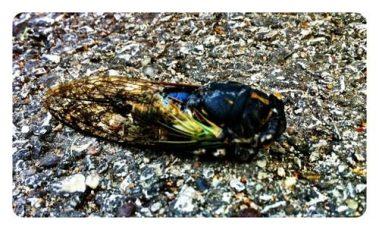 Daniel's Big Bug Hunt and Stomp