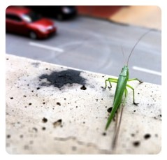 Don't Jump! Grasshopper Intervention