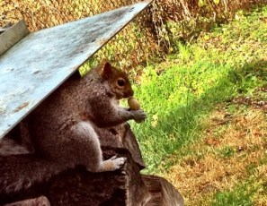 Daniel loved grandpa's squirrels