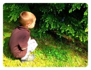 Daniel and Baby Bluebird
