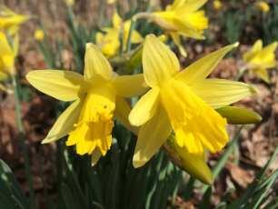 Spring has Spung