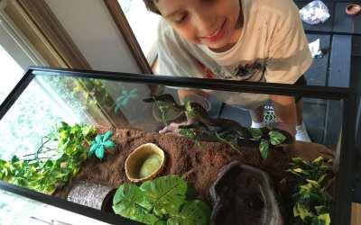 We upgraded Daniel's terrarium from a 10 to 20 gallon aquarium
