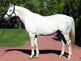Tapit King Of Kegs And The Kentucky Derby Horse Racing