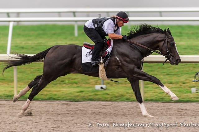 Honor Code Wicked Strong Return In Gulfstream Park