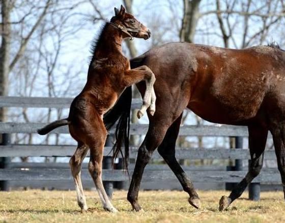 Merck Animal Health Presents Foals Of 2016: Warming Up ...