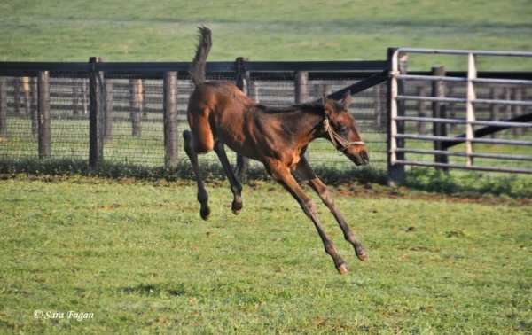 Merck Animal Health Presents Foals Of 2016: Play Time ...