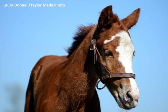 Merck Animal Health Presents Foals Of 2016: Stars And ...