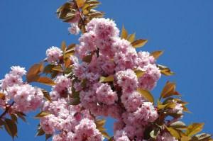 Flowering Trees '08