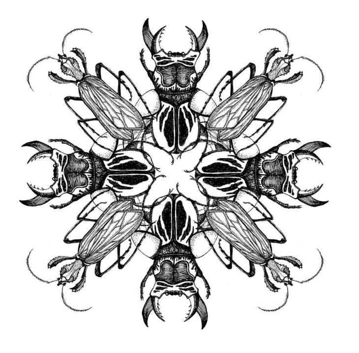 Pauline-Huard-design-textile-stylisme-illustration-graphisme-insecta-rosace-3