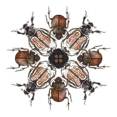 Pauline-Huard-design-textile-stylisme-illustration-graphisme-insecta-rosace-4
