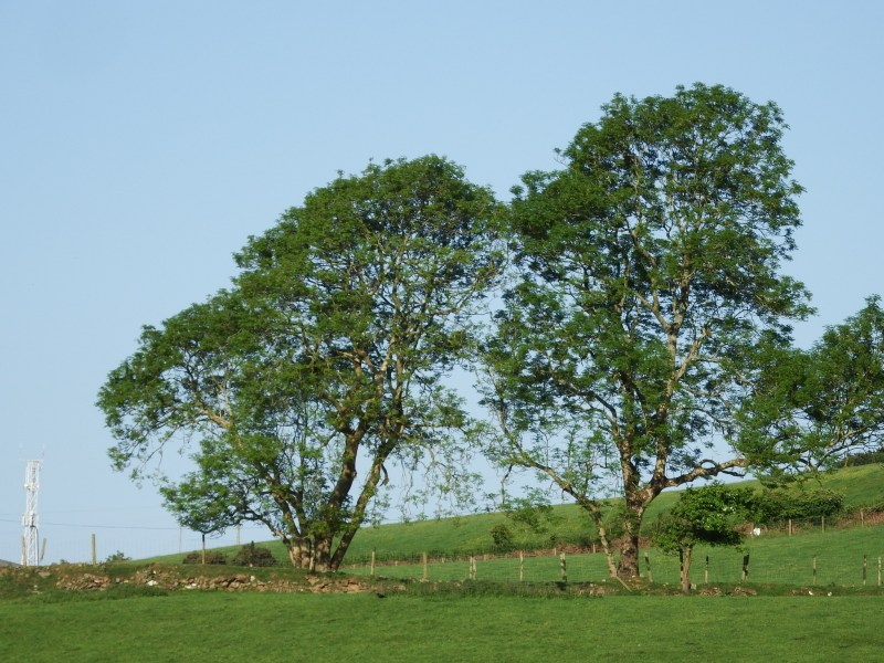 Public acceptability of tree breeding solutions to Ash dieback