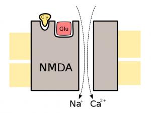 nmda receptor