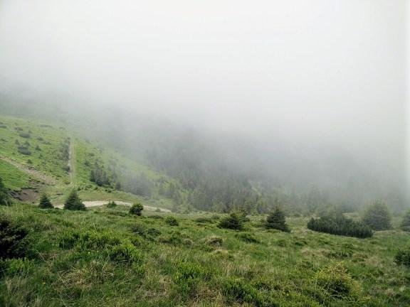 Forestier Vf Cearcanu