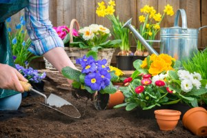 5 Spring Flowers for Your Landscape