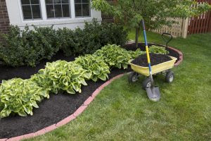 3 January Landscaping Tips