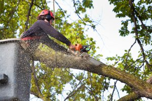 3 Things You Should Know About Tree Pruning