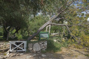 3 Signs That You Need Tree Maintenance ASAP