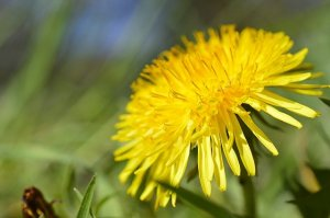 Beautify Your Yard With Spring Landscape Cleanup