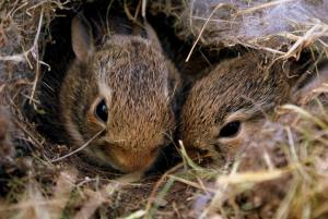 Hire a Lawn Mowing Service and Avoid Encountering These Critters