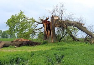 Recover From Summer Storms With Yard Cleanup Services