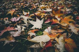 Protect Your Lawn With Leaf Removal Services