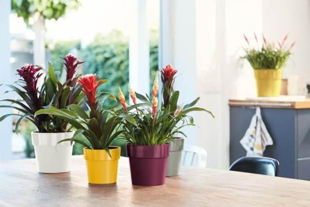 Plantes pour animaux domestiques