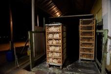 Cajas de pollos.