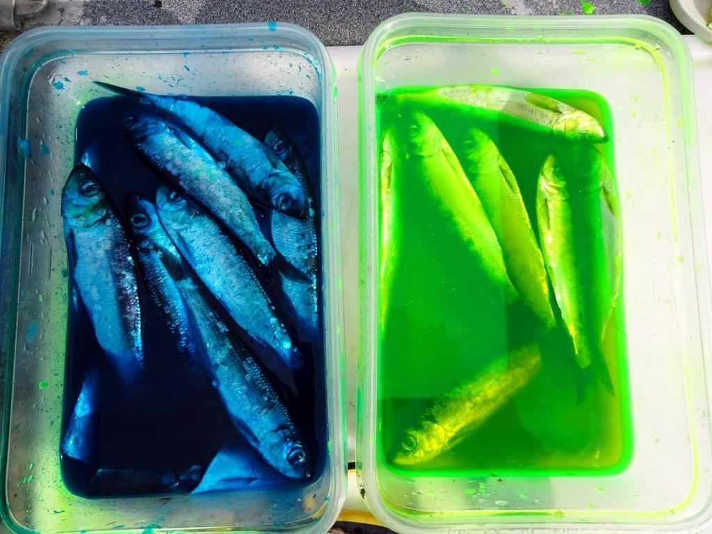 valdezfishing16
