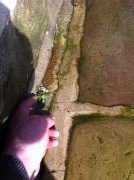 Remove weeds from paving by hand