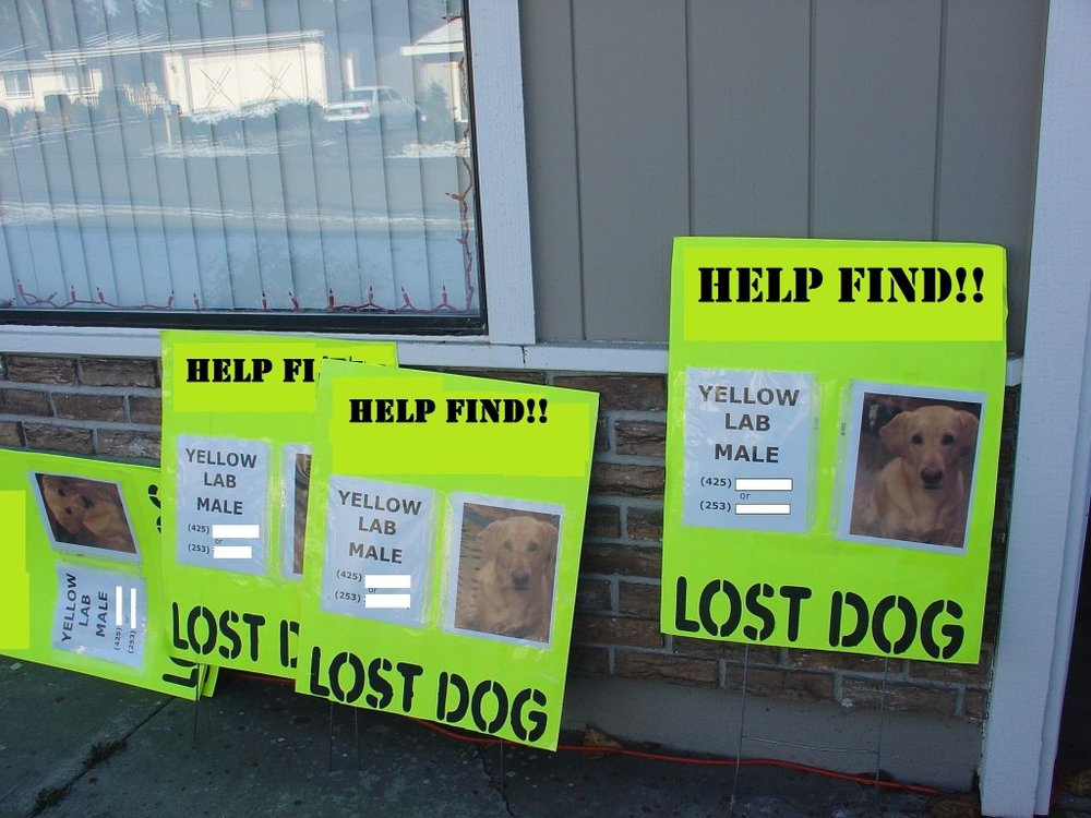 eye catching lost pet poster