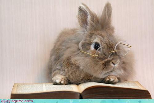 Image result for cute animals reading