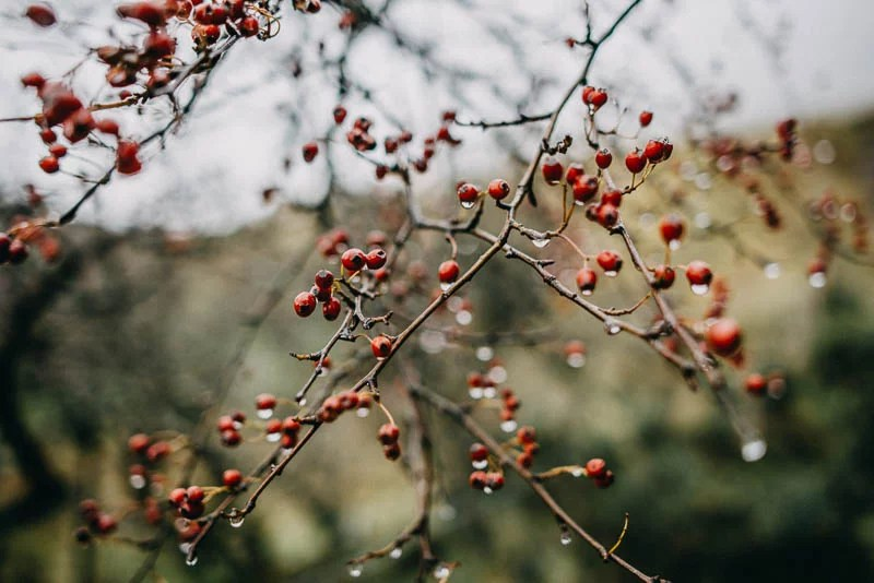 benbulben forest walk sligo engagement-14