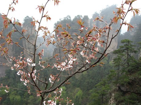 Zhangjiajie - totu kręcono Avatara 13