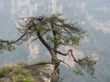 Zhangjiajie - to tu kręcono Avatara