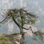 Zhangjiajie - totu kręcono Avatara 1
