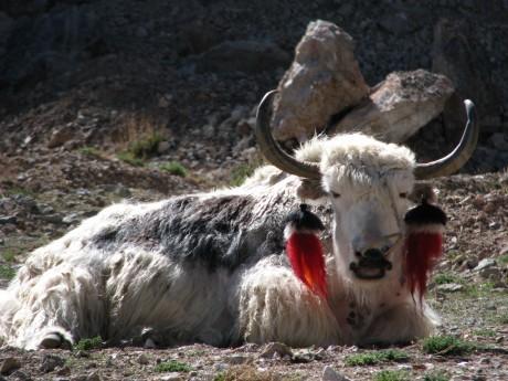 Nam-Tso - święte jezioro tybetańskie 42