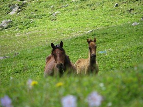 Treking wgórach Tien Shan (Kirgistan) 11