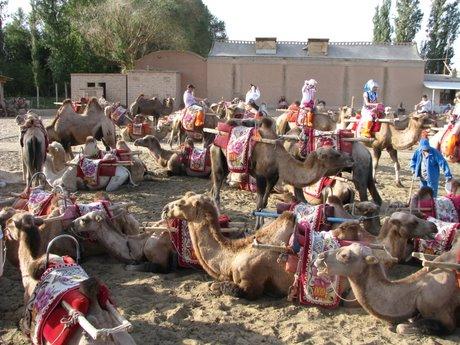 Dunhuang - pustynia, wielbłądy ibuddyjskie groty 16