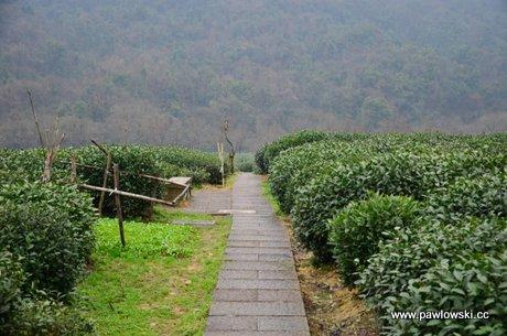 Muzeum herbaty w Hangzhou 1