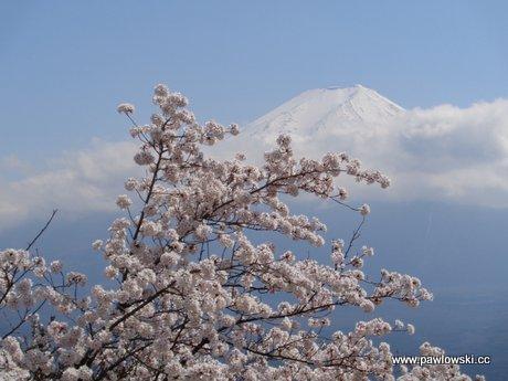 Japonia - Kawaguchiko z widokiem na Fudżi 1