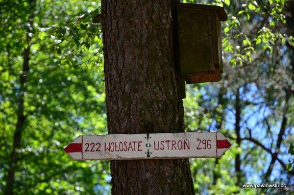 Główny Szlak Beskidzki; Mochnaczka Niżna - Bacówka PTTK wBartnem 14
