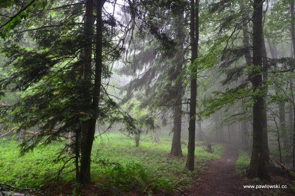 Główny Szlak Beskidzki; Puławy Górne - Prełuki 17