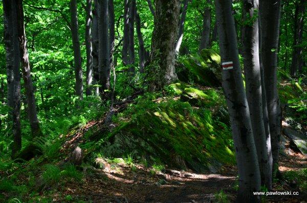 Główny Szlak Beskidzki; Prełuki - Cisna (Bacówka PTTK podHonem) 20