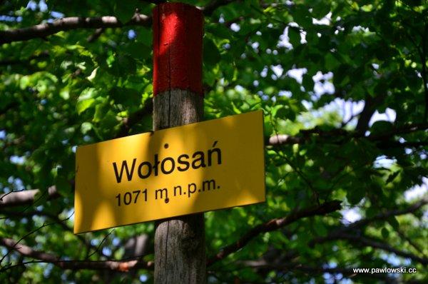 Główny Szlak Beskidzki; Prełuki - Cisna (Bacówka PTTK podHonem) 22