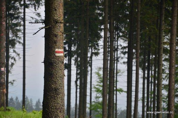 Główny Szlak Beskidzki; Ustroń - Schronisko PTTK naPrzysłopie podBaranią Górą 14