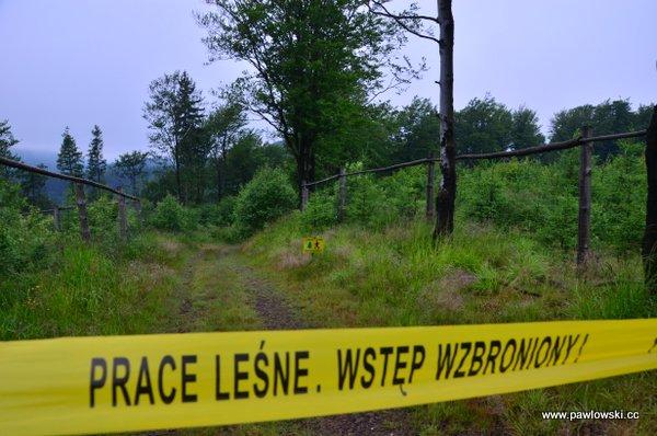 Główny Szlak Sudecki; Schronisko Andrzejówka - Schronisko PTTK Zygmuntówka 7