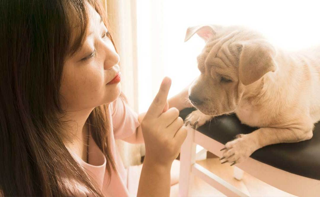 When To Begin Brushing Your Puppy's Teeth