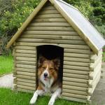 sponsor_dog_kennel